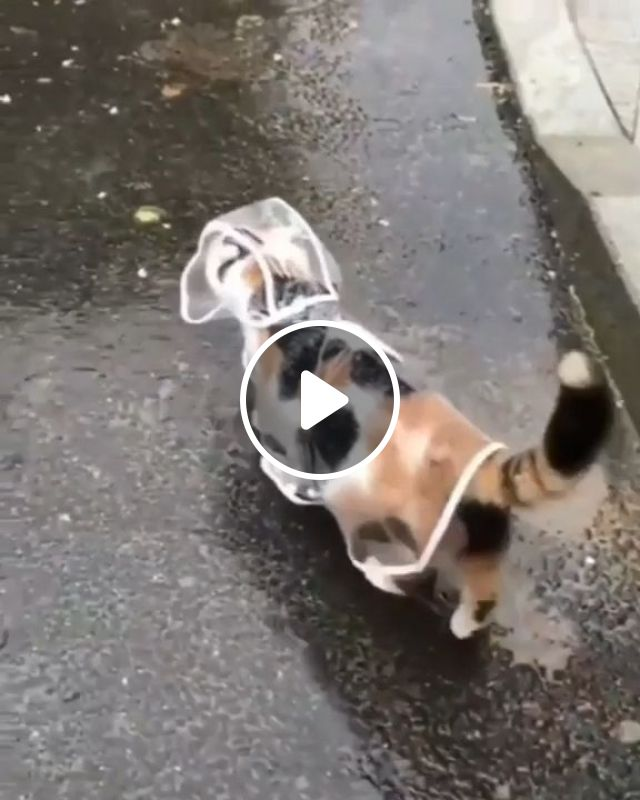 Cat In Raincoat GIF - Video & GIFs   cute pet, rain, cute cat
