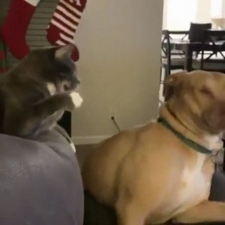 Wake up lazy dog, let's secure your home - Funny Videos - funvizeo.com - funny cat videos,funny pet,fight,lazy