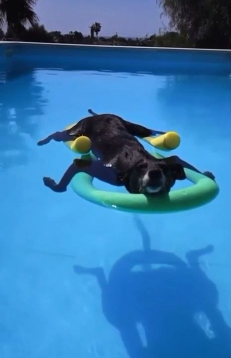 I aspire to be as relaxed as this dog