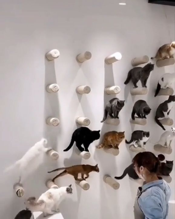 Wall of Sisal Posts for Cats