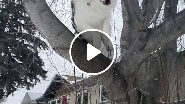 Best Dog Parkour - Video & GIFs | funny dog gif, funny pet, parkour