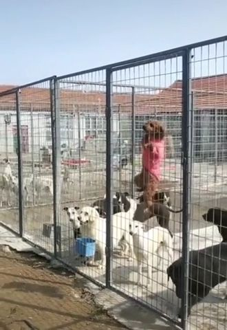 Best dog climbing fence ever LoL - Funny Videos - funvizeo.com - funny dog videos,funny pet,climb