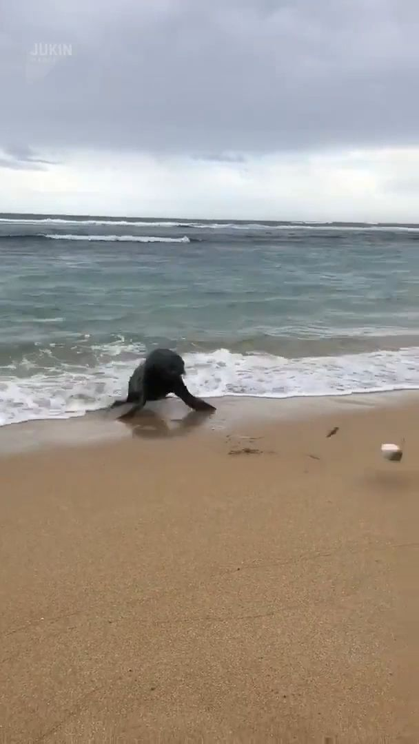 Sea Lion Chases Fish Caught on Hook - Funny Videos - funvizeo.com - funny animal videos,wild animal,funny,sea lion