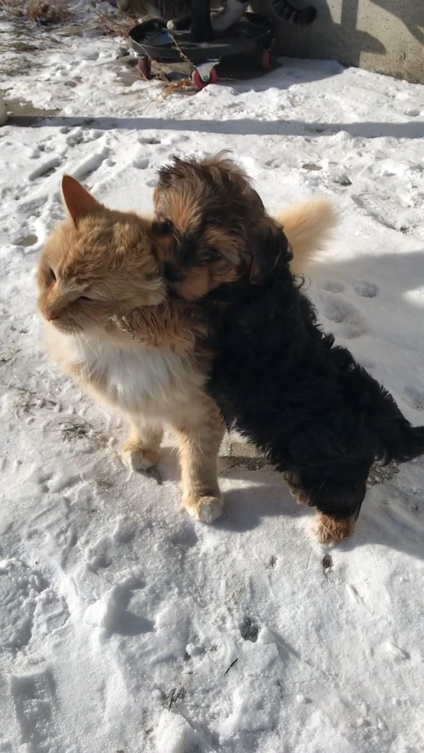 Cute cat and adorable puppy - Video & GIFs | cute puppy videos,cute pet,hug