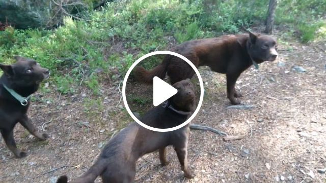 Unbelievably Well Trained Dogs - Video & GIFs | smart dog, dog training, funny pet, awesome