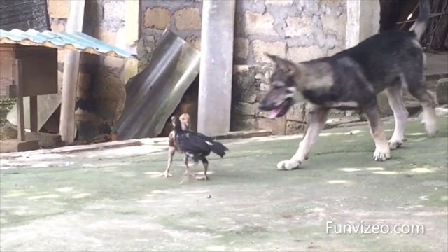 Wait For It....LOL - Funny Dog Videos