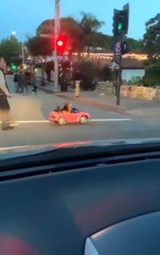 Corgi's luxury car - Funny Videos - funvizeo.com - pembroke welsh corgi,luxury car,cars for kids,baby electric car,funny dog,funny pet,traffic lights