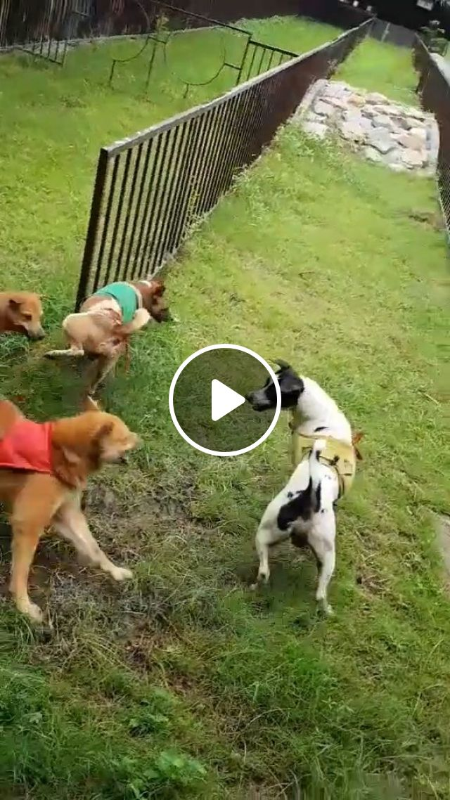 Funny Dog Videos - Bravery of a champion, funny dog videos, funny pet videos, dog racing, fence