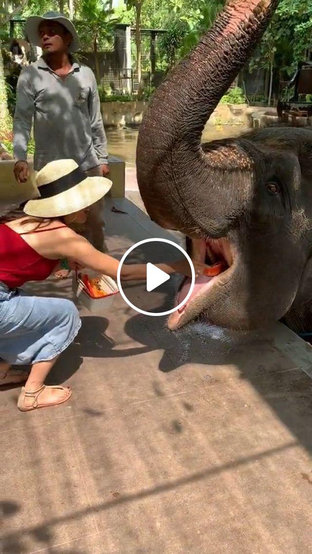 Feeding Elephant - Video & GIFs | funny animal gifs, elephant, fruits, zoo