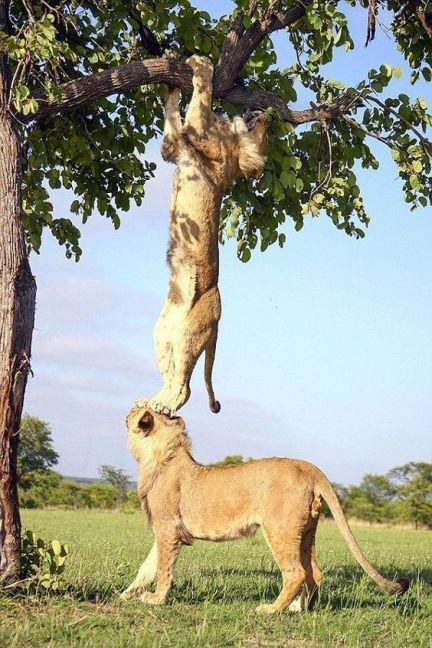 Funny Animal Pictures - Help each other climb the tree