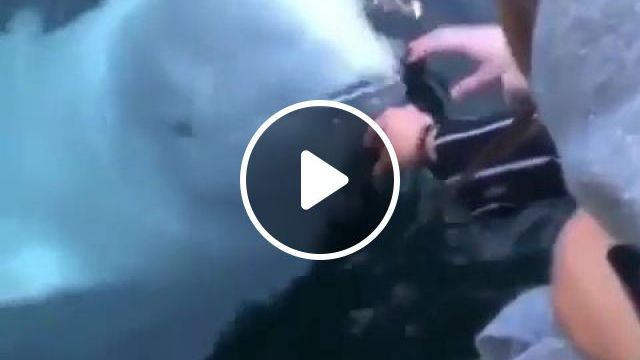 White whale rescues phone dropped in sea