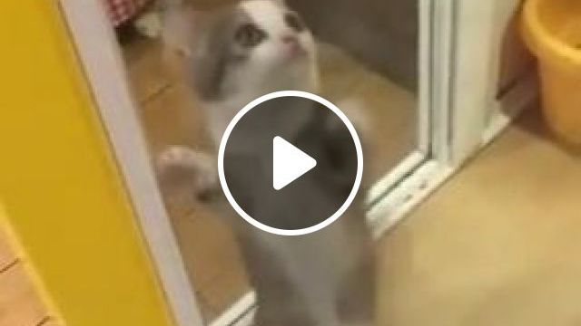 Funny cat videos - Cute and Funny Kitten dancing