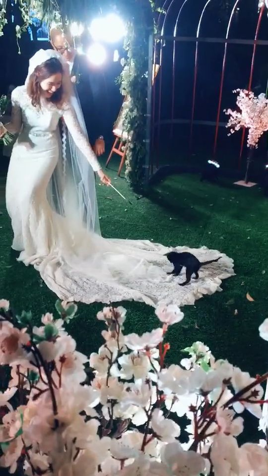 Cute Kitten love the wedding dress