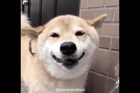 Dog Has Most Adorable Smile - Funny Videos - funvizeo.com - funny dog videos,funny pet videos,smile,drink,water