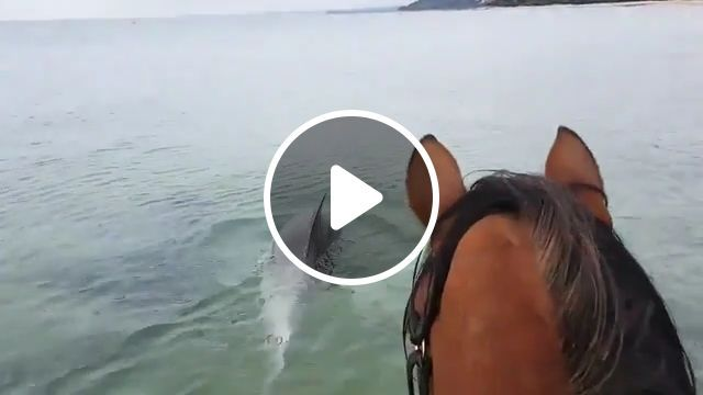 Incredible moment horse goes swimming with dolphins