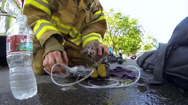 Rescue team saves kitten