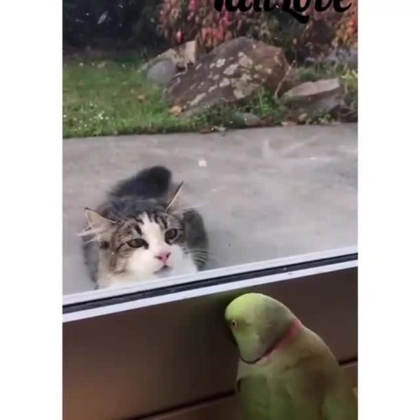 Peek A Boo Game - Video & GIFs | funny bird,funny parrot,funny cat,game,window