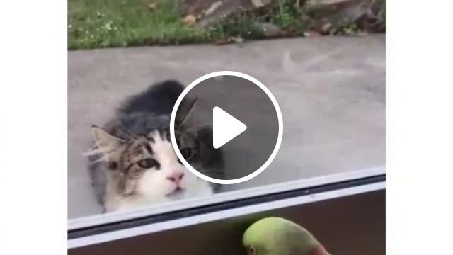 Peek A Boo Game - Funny Videos - funvizeo.com - funny bird,funny parrot,funny cat,game,window