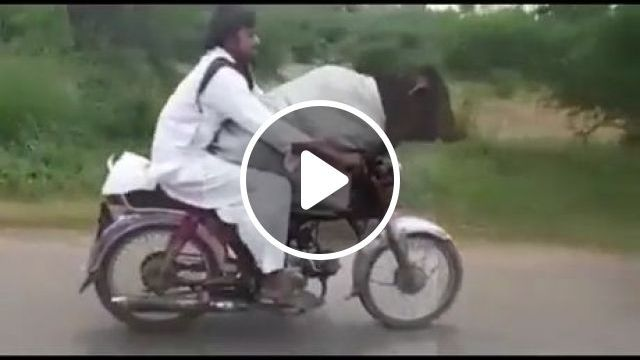 Big Pet Rides On Motorbike With Owner