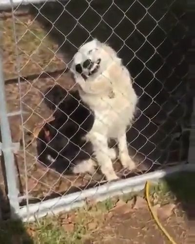 Funny dog GIFs - Be careful of angry dogs