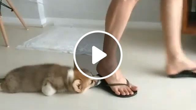 How to Stop a Dog From Eating Shoes and Slippers, funny dog videos, funny pet videos, sandal, funny