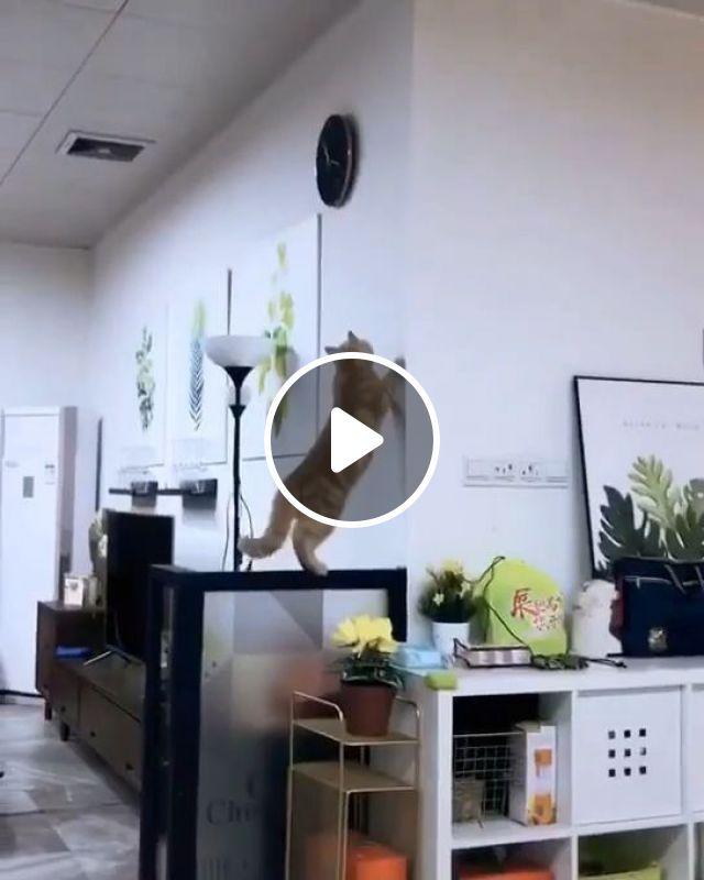 No Jack, Don't Break The Clock - Video & GIFs   funny cat videos, funny pet videos, jump, clock