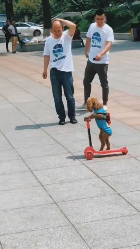 Funny Dog Videos - Amazing Dog! - Funny Videos - funvizeo.com - funny dog videos,funny pet,smart dog,3 wheel scooter