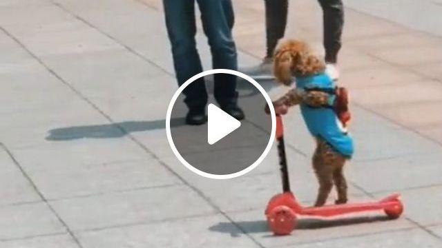 Funny Dog Videos - Amazing Dog!