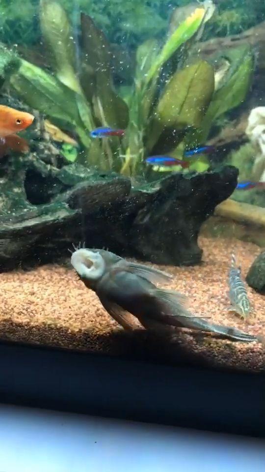 Funny Fish - Super Rapper