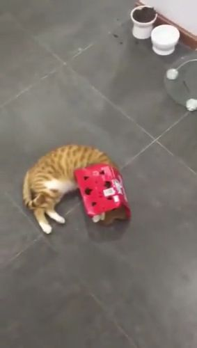 Why Do Cats Like Boxes? - Funny Videos - funvizeo.com - funny cat,funny pet,cats in boxes