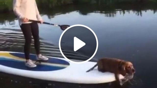 Dog goes paddle boarding with owner