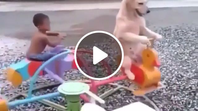 Game of childhood with man's best friend, cute dog videos, cute pet videos, kid, game, funny