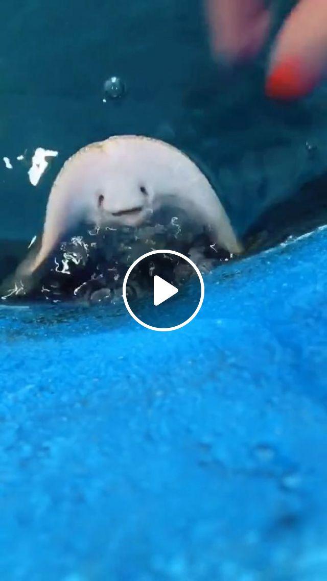 Funny Stingray GIFs - Video & GIFs   funny fish, funny animal, stingray