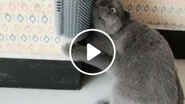 Funny Cat Videos - Great, he really likes this - Funny Videos - funvizeo.com - funny cat,funny pet,cat self groomer