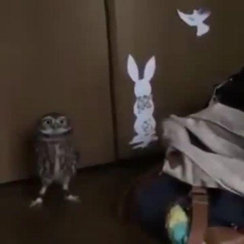 Funny owl, haha