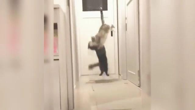 Ninja Cat Showings Kung Fu Skill