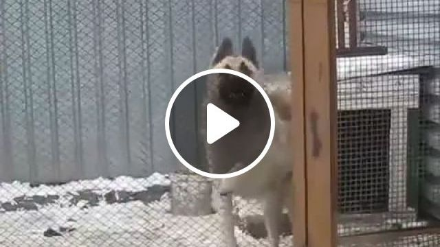 Happy Dog Dance GIFs - Funny Videos - funvizeo.com - Funny Dog GIFs,Funny Pet GIFs, dance, kennel