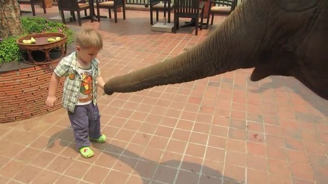 Cute baby feeding elephant - Funny Videos - funvizeo.com - cute animal gifs,funny,elephant,banana