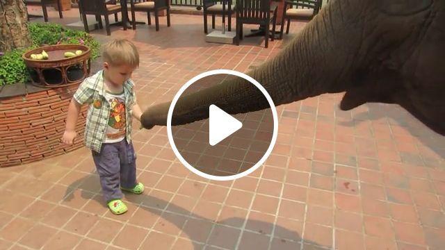 Cute baby feeding elephant