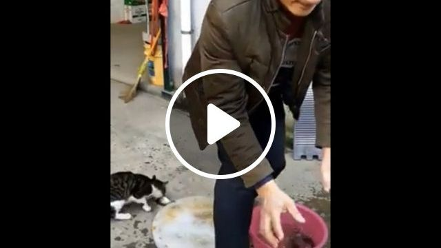Where is my fish? - video - funvizeo.com - funny cat gifs,funny pet gifs,fish,thief