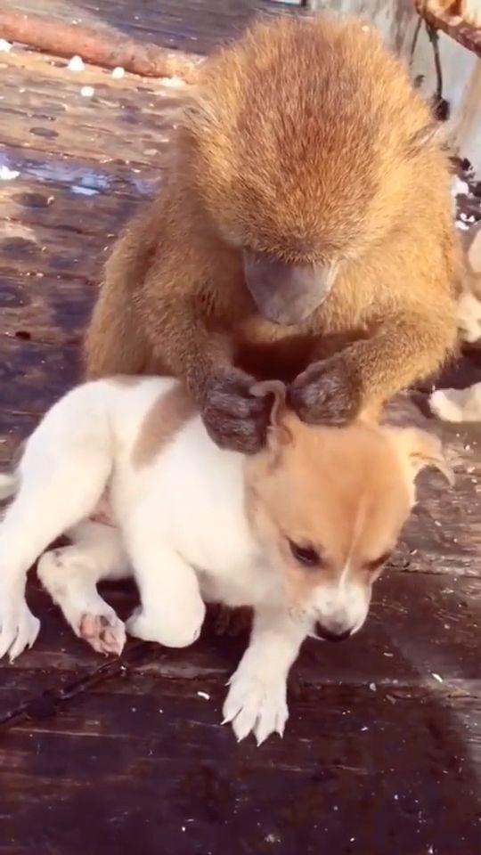 Cute Animal GIFs - It's so cute