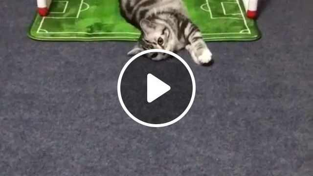 Best goalkeeper of all time - Cute Cat GIFs - Funny Videos - funvizeo.com - cute cat gifs,cute pet gifs,football,cat,goalkeeper