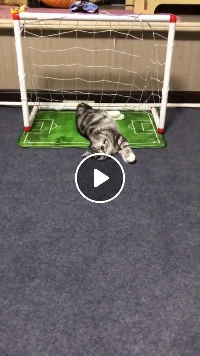 Best Goalkeeper Of All Time - Cute Cat GIFs - Video & GIFs | cute cat gifs, cute pet gifs, football, cat, goalkeeper