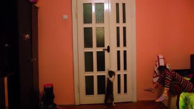 Clever Cat Opening Door