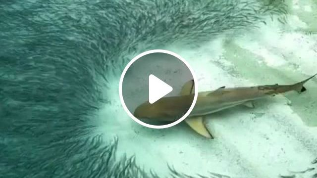 Shark GIFs - Beautiful nature