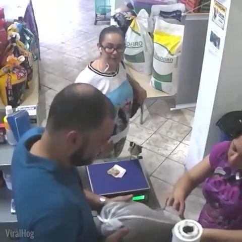 Amazing - Bird steals money