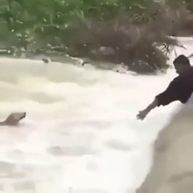 Rescue dog in the flood