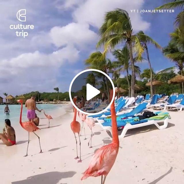 Flamingo Beach Aruba, beautiful nature, flamingo, beach, animal