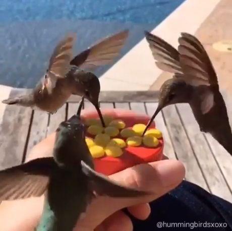 Feeding Hummingbirds By Hand