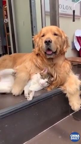 Cat And Dog Friendship - Funny Videos - funvizeo.com - cute cat videos,cute dog videos,pet,friendship